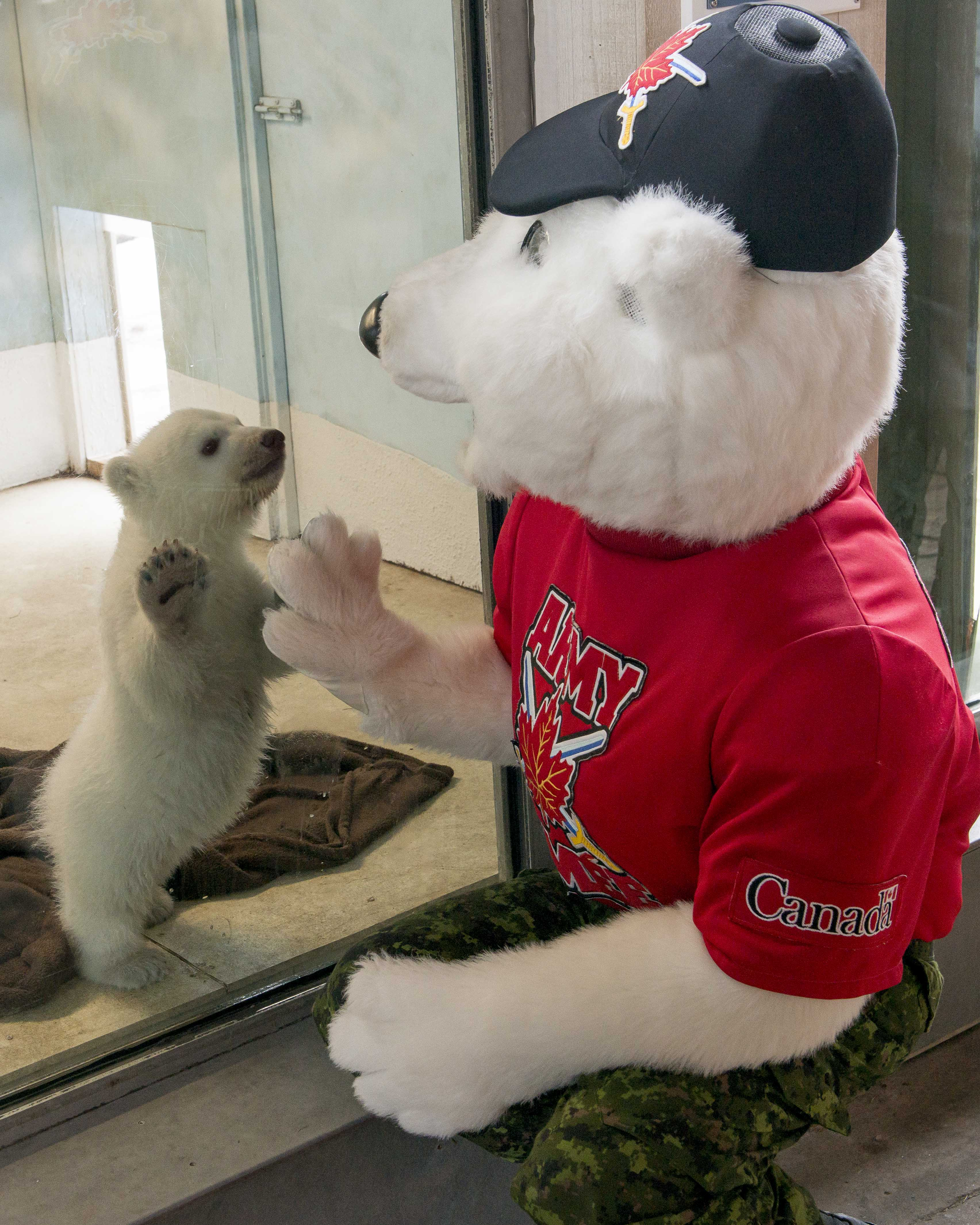Canadian Army mascot Juno says hello to a newly adopted polar bear cub.