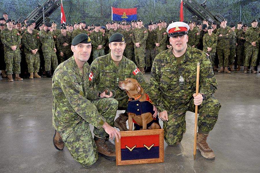 Captain Nicholas Kaempffer with Gunner (Canine Trained) Loki following Gnr (TC) Loki's promotion to his current rank on December 11, 2017 by Lieutenant-Colonel Nickolas Roby (centre) and Chief Warrant Officer François Vidal (right) of The Royal Regiment of Canadian Artillery School. 